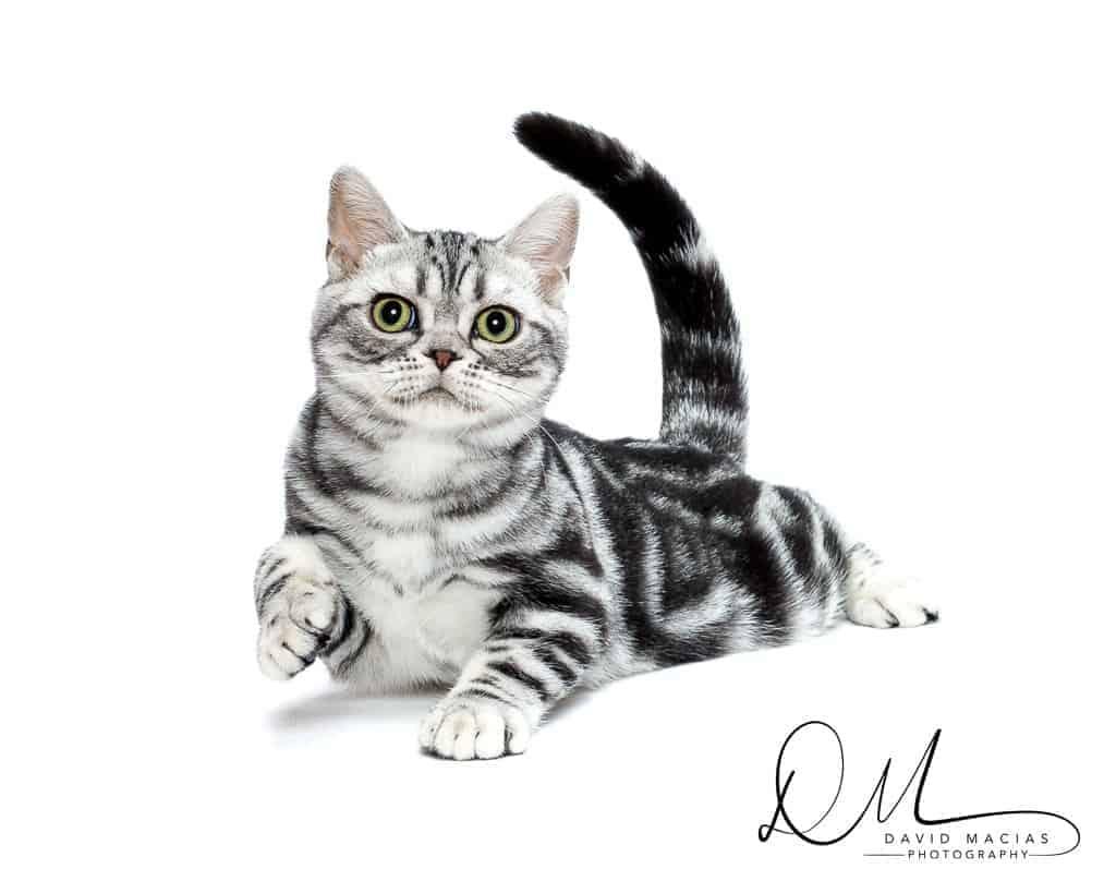 Milla's Kats Cattery